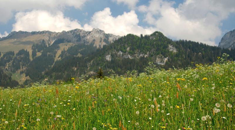 Ecoturismul in Romania
